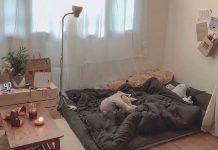 Tự decor phòng trọ