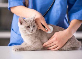 chăm sóc mèo đẻ