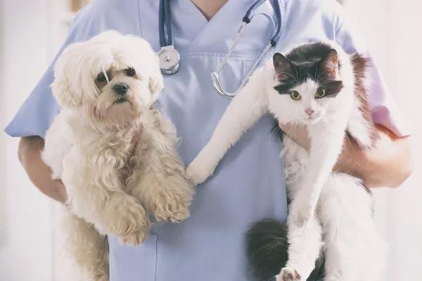 ngành bác sĩ thú y