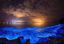 sóng biển phát sáng màu xanh
